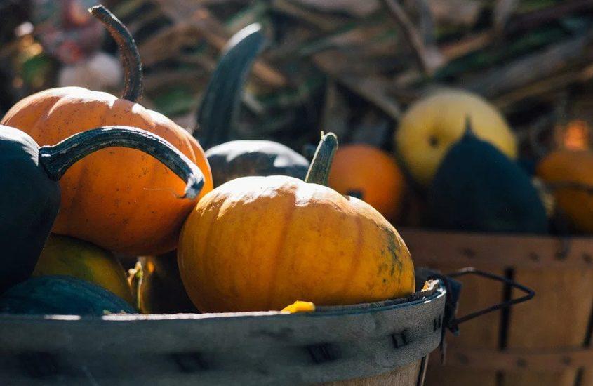 The Fall 13: A Bucket List